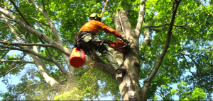 san antonio tree services